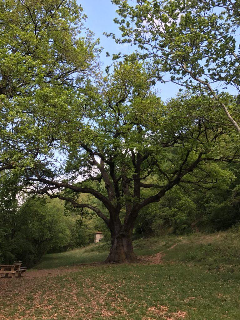 Lake como hiking - oak tree Rogolone - Hotel Loveno